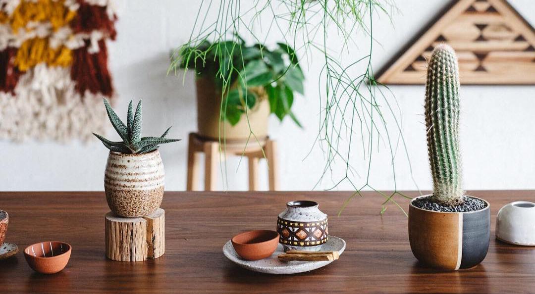 Indoor plants on bench