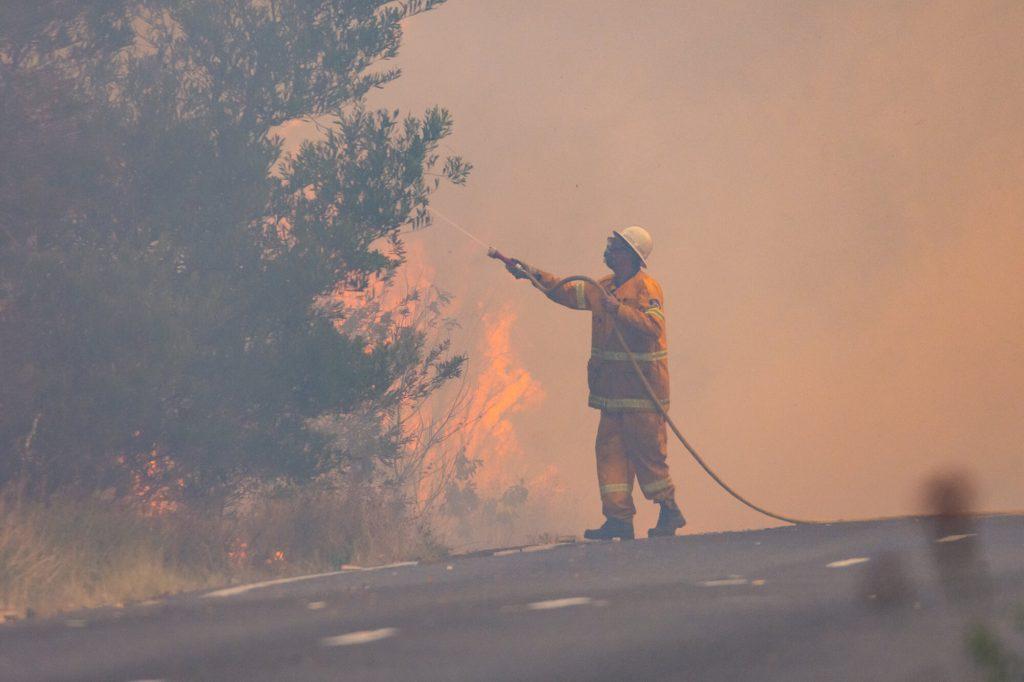 bushfire mama disrupt